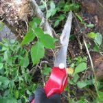【いいね!サービス】畑の土掘り起こしから続くパート2 枝葉の伐採模様