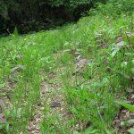 【2018年畑プロジェクト】芋畑、秋の豊作を願ってコマメに草むしり。