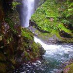 【高知の滝めぐり15 瀬戸の滝】轟音が響き圧倒された滝。天然の鳥居杉も一見の価値あり。