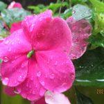 6月頃に咲くお花の写真  第2回