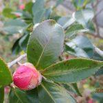 ガス屋さんの、、、フォトコレクション 冬場に咲く花・