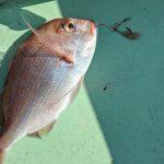 久し振りの海釣りへ!いろんな魚が釣れました(*^^)vの巻